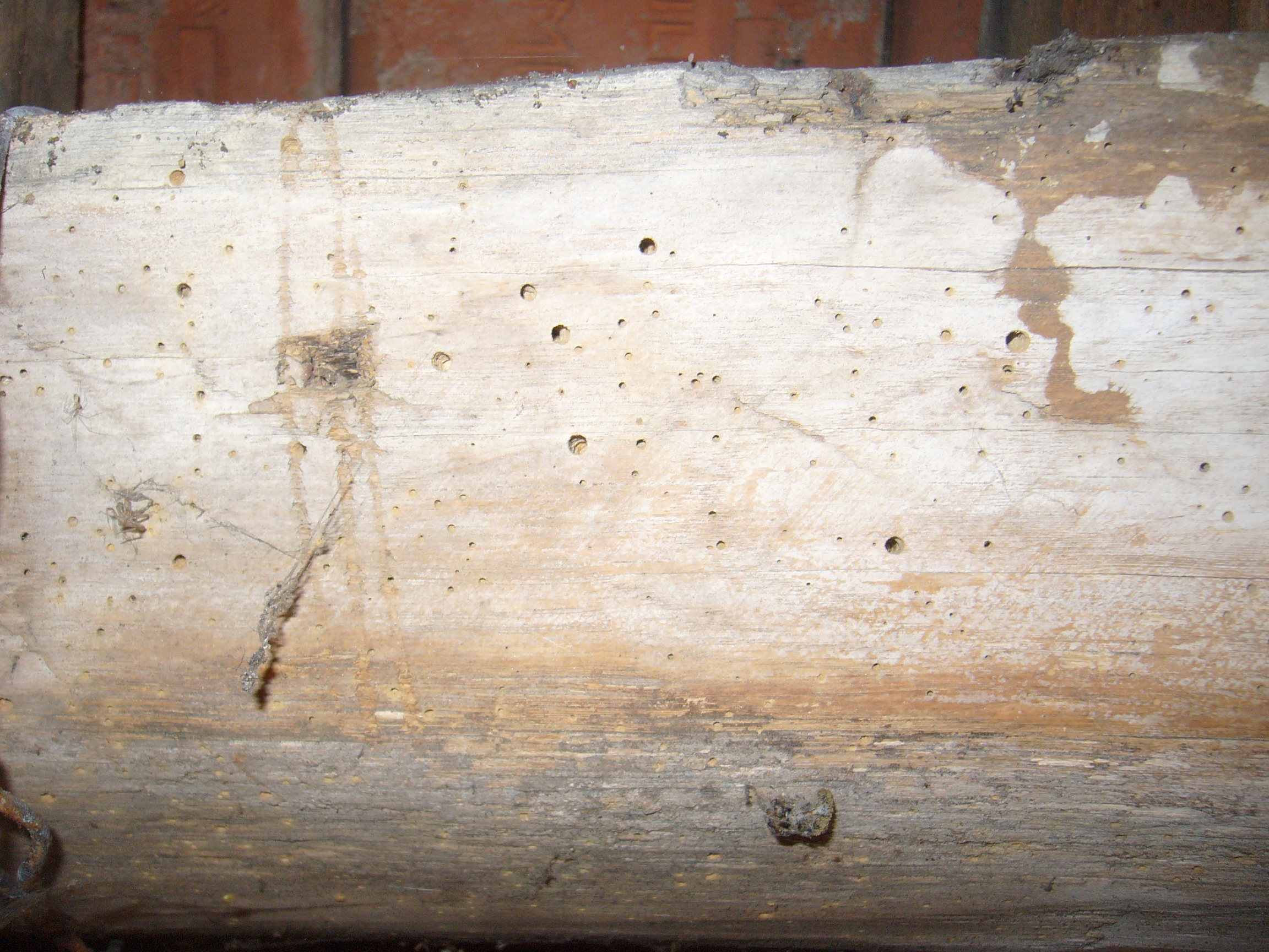 Dry Rot And Woodworm Treatment